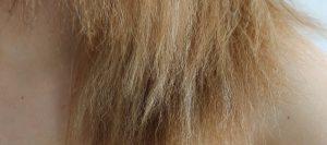 Couleur qui tient sur cheveux blancs